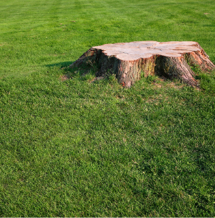 Stump that was grinded in middle of yard